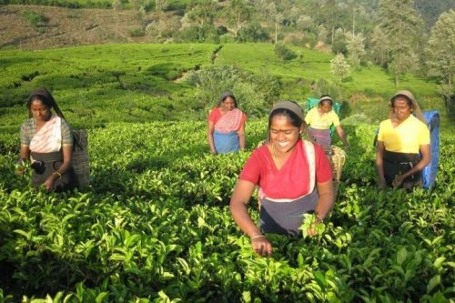 Sri Lanka - w herbacianym raju