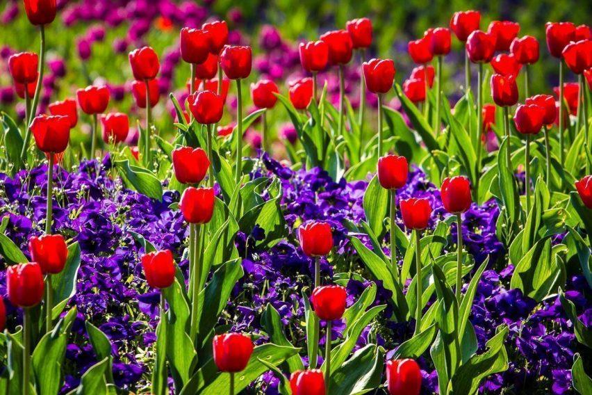 wyjazdy weekendowe holandia amsterdam festiwal tulipanów keukenhof funclub-16