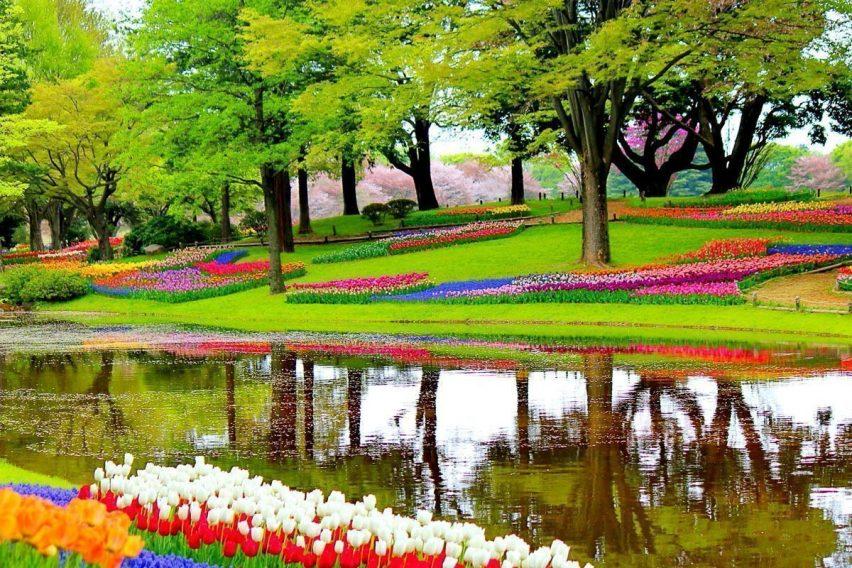 wyjazdy weekendowe holandia amsterdam festiwal tulipanów keukenhof funclub-23