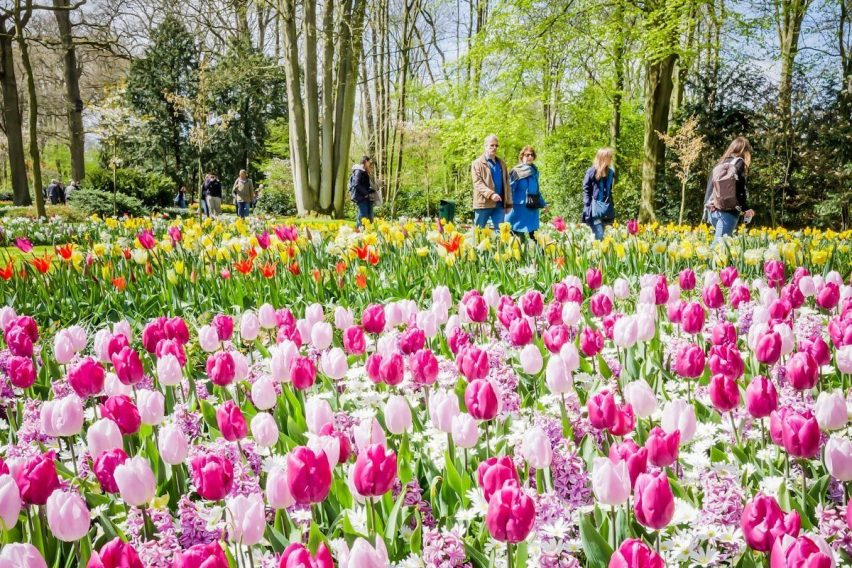 zwiedzanie weekendowe holandia keukenhof amsterdam tulipany funclub-4