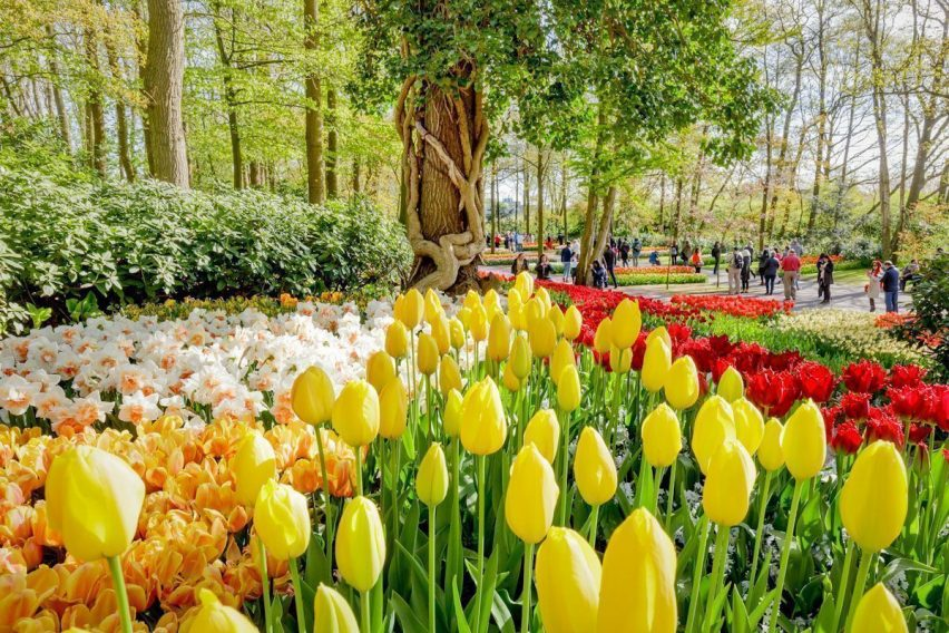 zwiedzanie weekendowe holandia keukenhof amsterdam tulipany funclub-5
