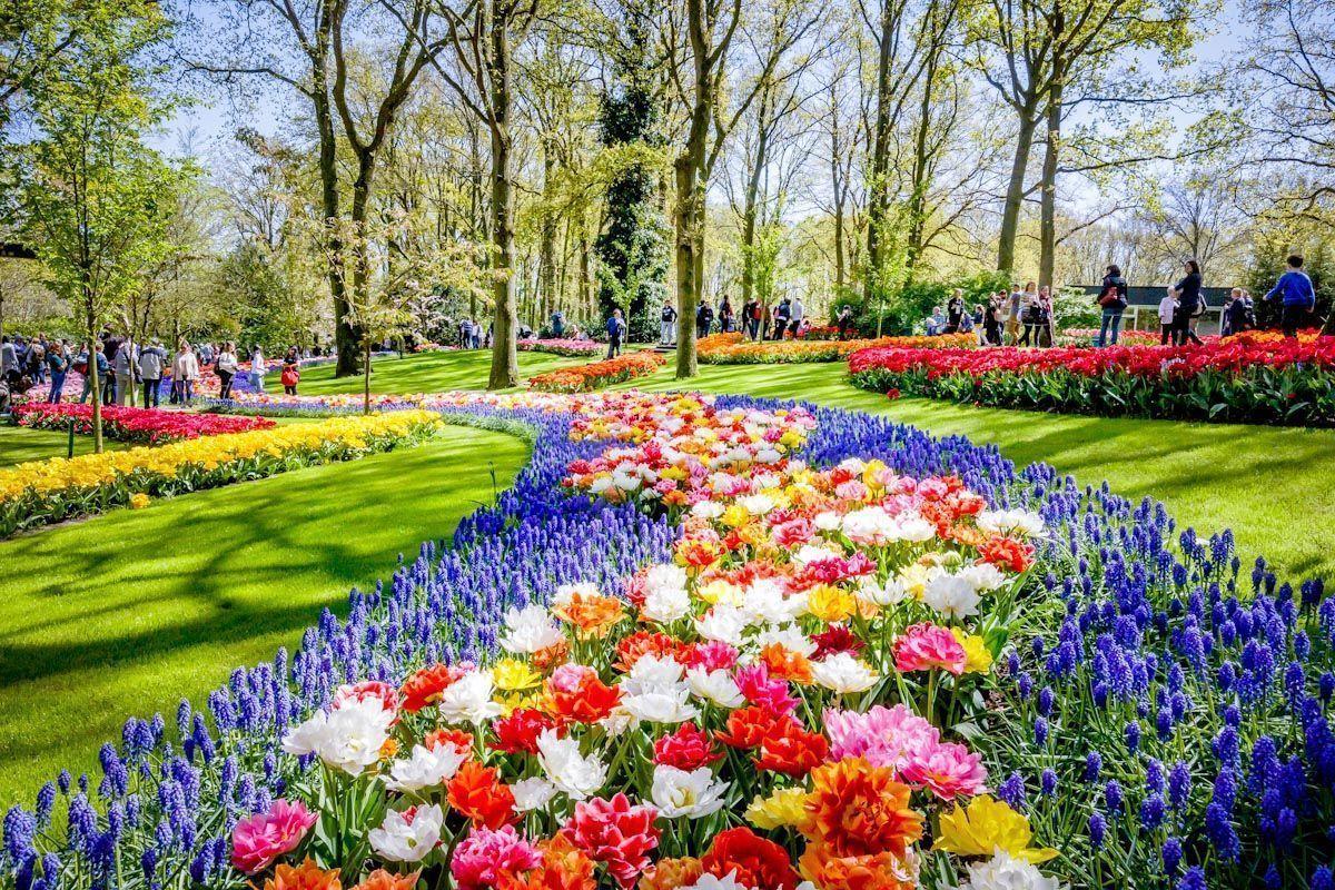 Amsterdam i festiwal tulipanów z NOCLEGIEM