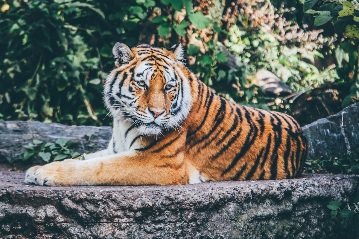 Skalne miasto Adrspach i Zoo Safari na 1 dzień z Karkonoszy